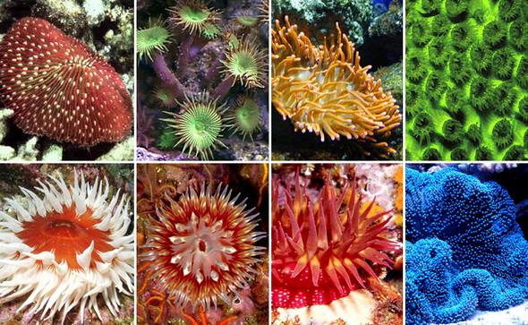 Коралловые полипы верхний ряд слева