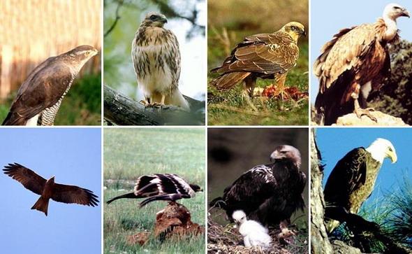 Картинки птицы дрозд.  Фото птицы с коростель.  Птица королек фото.