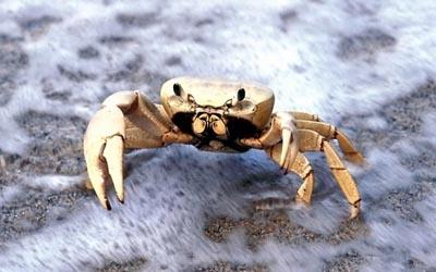 Хитин является основным компонентом наружного скелета членистоногих