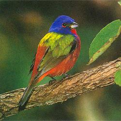 Важной составляющей естественного отбора является половой отбор. Так, самки многих птиц охотнее скрещиваются с самцами, имеющими более яркую окраску